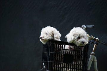 Witte honden van Wouter Moné