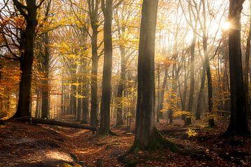 Belgie - Knesselare - Drongengoedbos van Fotografie Krist / Top Foto Vlaanderen
