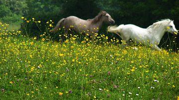 Paarden In Vrijheid van Daphne Photography
