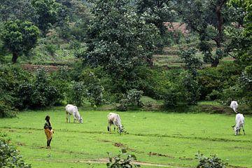 ländlichen Indien von Cora Unk