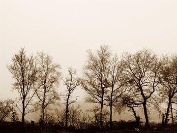 Oude bomen van André Mesker