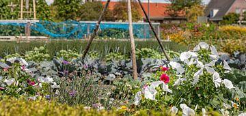 Ein Blumenfeld und ein Gemüsegarten von Percy's fotografie