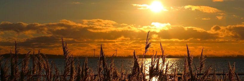 Ein goldiger Morgen van Ostsee Bilder
