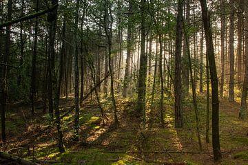 Hoornse bos met zonsopkomst van Arie Jan van Termeij