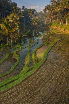 Zonsopkomst Bali van Sander Groenendijk