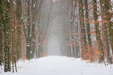 Waldlandschaft im Schnee von Francis Dost