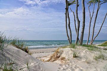 Westelijk strand bij de Darss van Joachim G. Pinkawa