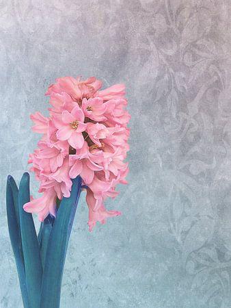 Frühlings-Hyazinthe von INA FineArt