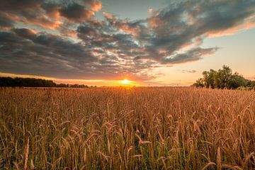 Zonsopkomst boven graanveld