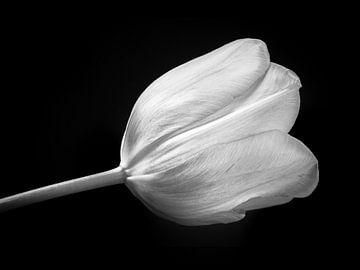 Tulpe in Schwarz-Weiß von Arno Litjens