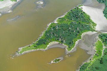 Luftaufnahme Naturschutzgebiet Oostvaardersplassen von aerovista luchtfotografie