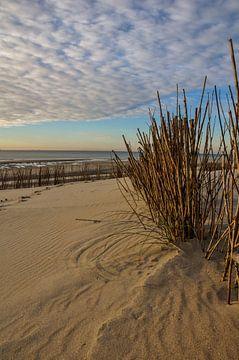Strand Maasvlakte2 von Pauline Paul