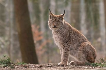 Lynx van Jessica Blokland van Diën