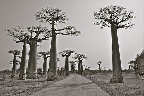 Die Straße zum Unbekannten von Iduna vanwoerkom