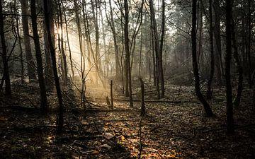 Bos van BOZ (Bergen op Zoom) van Maurice Weststrate