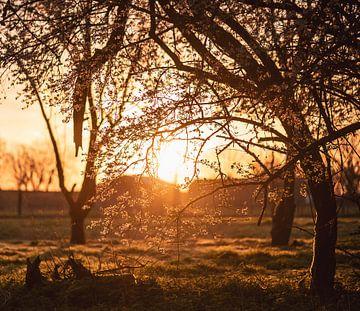 blühen in der Morgensonne von Tania Perneel