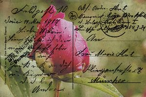 Field Wenskaart mei 1917 van Christine Nöhmeier