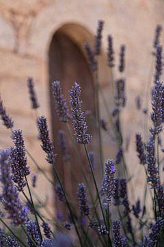 Lavendel in Zuid-Frankrijk - Provence van HappyTravelSpots