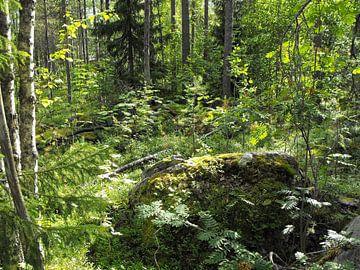 Natur pur in Finland von Jutta Klassen