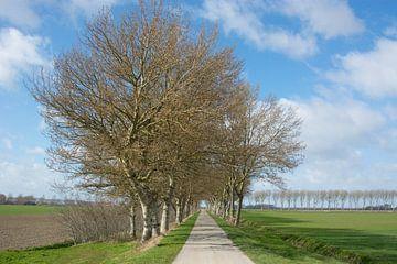 Bomen rij op Noord Beveland van Teus Reijmerink