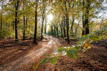 Herbstlandschaft Veluwe bei Garderen von Fotografiecor .nl
