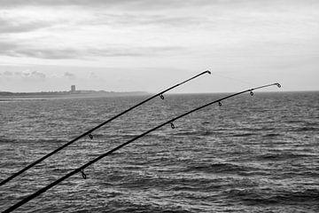 Vissen van Stef De Vos