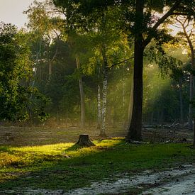 Mooie lichtval in de vroege ochtendnevel van Epic Photography