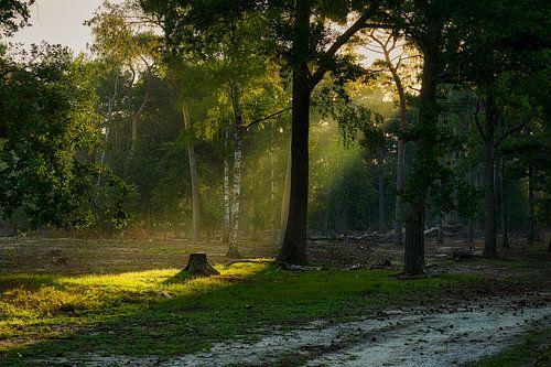 Mooie lichtval in de vroege ochtendnevel