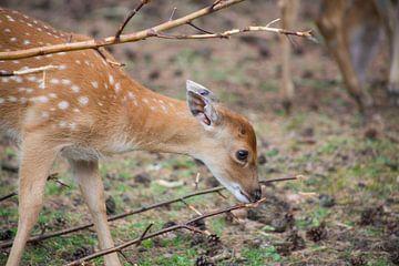 bambi in het bos van marijke servaes