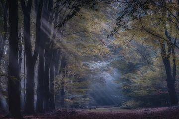 Zonlicht in het bos van Niels Barto