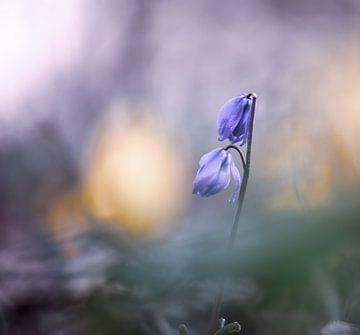 Blumen Teil 59 von Tania Perneel