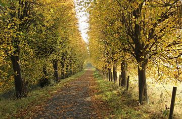 Herbstliches Glühen von Esther Leijten-Kupers