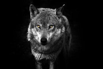 Wolf II von