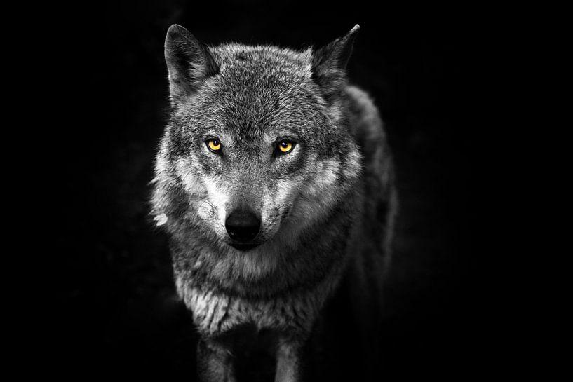 Wolf II van Nova Art