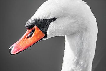 Swan face van Fotografie Jeronimo