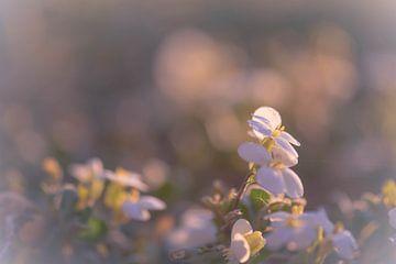 weiße Blüten auf der Unterseite von Tania Perneel