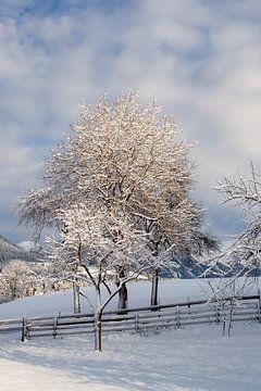 Winter en zon in de bergen von Jani Moerlands