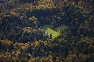 Hart in het bos als teken van liefde voor de natuur