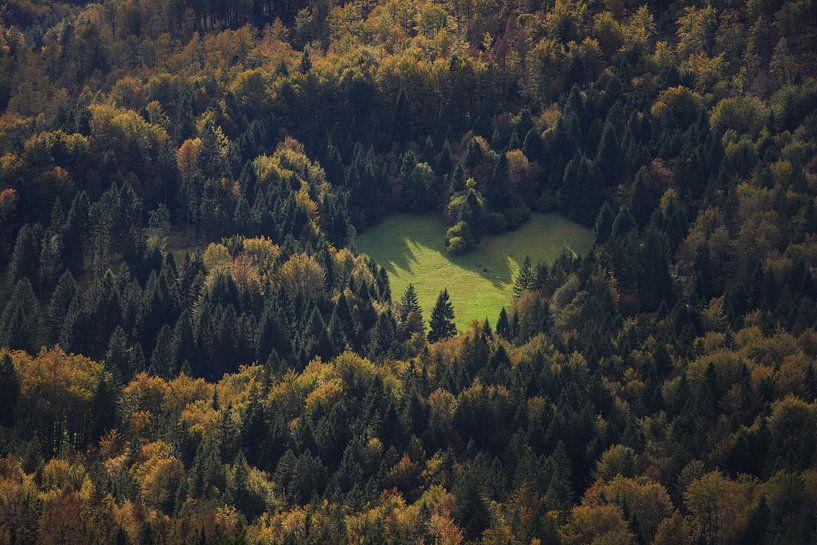 Hart in het bos als teken van liefde voor de natuur van iPics Photography