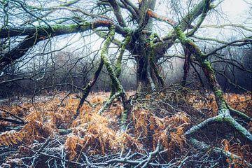 Baumtentakel van Joris Pannemans - Loris Photography
