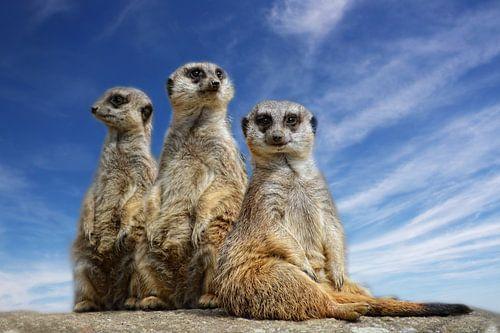 Drie kleine zussen van Claudia Moeckel
