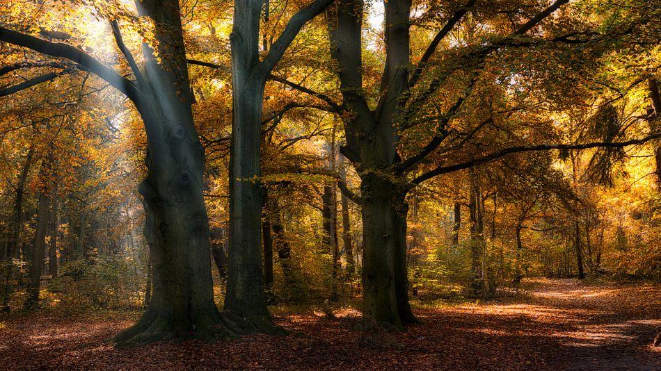 Zonnestralen in een herfst bos