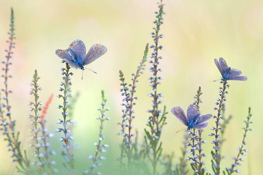 Butterflowers van Teuni's Dreams of Reality