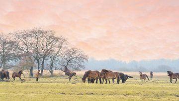 Exmoor-Ponys auf der Wiese 12. von Marcel Kieffer