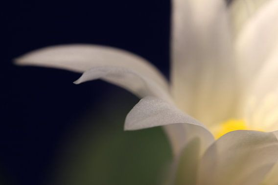 Zarte weisse Blüte van Rosi Lorz