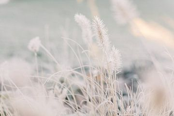 Lampenschirm Gras mit Raureif im Winter | Naturfotografie Wandkunst von Milou van Ham