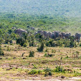 Olifantenkudde in Addo Elephant National Park van Koen Henderickx