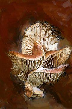 Pilze von Harry Stok