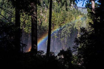 Regenboog in het woud van Peter Leenen