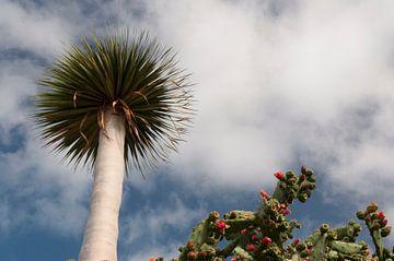 Bloeiende cactus en losstaande boom van